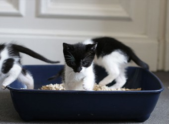 Katzenklo-macht-die-Katze-froh