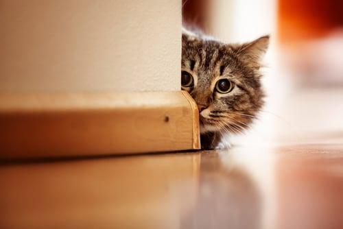 Katze Eingewoehnen Katzenratgeber Tierschutz Shop