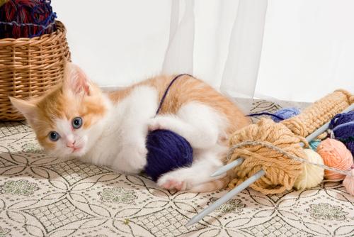 Katzen Training Tierschutz Shop