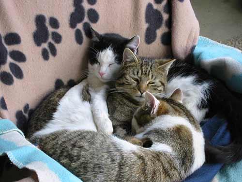 Katzenratgeber-neue-Katzen-Tierschutz-Shop