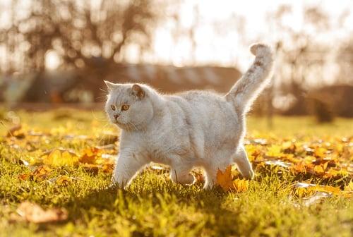 Freigaengerkatzen Sicherheit