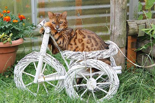 Freigaengerkatzen