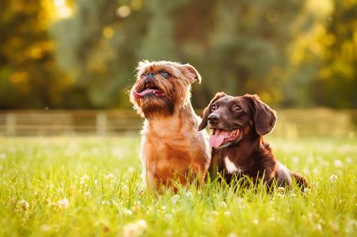 Hunde einander gewoehnen