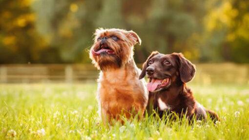 Tipps und Tricks: Hunde aneinander gewöhnen