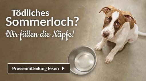 Tierschutz-Shop-Spendenplattform-Toedliches-Sommerloch-Pressemitteilung