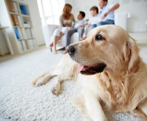 Hund im neuen Zuhause eingewoehnen