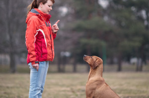 gute Hundeschule finden
