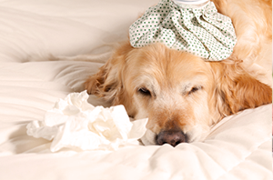 Häufige-Krankheiten-bei-Hunden
