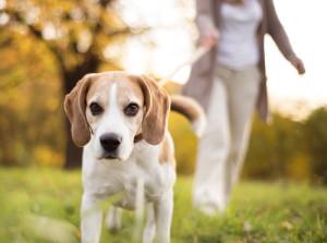 Hundegerechte Eingewöhnung