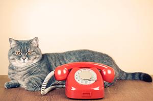 Wissenswerte Adressen und Hotlines für Katzenbesitzer