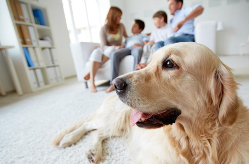 Zuhause auf den Einzug eines Hundes vorbereiten