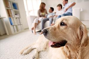 Wie bereite ich mein Zuhause auf den Einzug eines Hundes vor