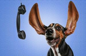Wissenswerte Adressen und Hotlines