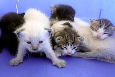 Notfallwunschliste Tierschutz-Shop - Futter spenden für den Notfall