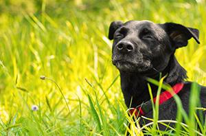 giftige-Pflanzen-und-Co-für-Hunde