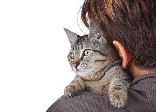 Sicherheit in den eigenen vier Wänden für Katzen
