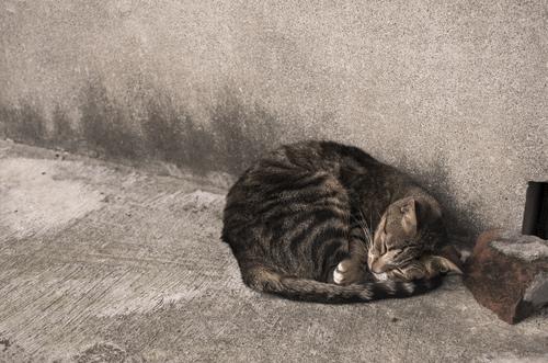 Krankheiten bei Katzen