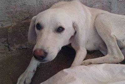 Frieden für Pfoten Tierschutz-Shop Futter spenden