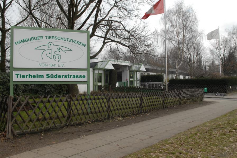 tierschutzverein hamburg 4