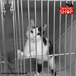Katze Tierversuche