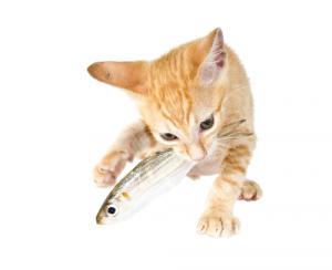 10-Dinge-Lebensgefahr-Katze