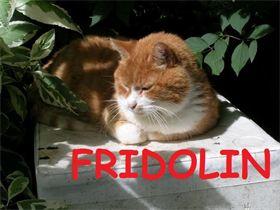 Fridolin.jpg