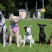 hunde-aus-dem-team-von-tierschutz-shop-v-l-duende-sally-flocke-scotti-mira-foto-philip-mueller-copyright-tierschutz-shop