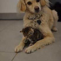 verwaistes-kitten-mit-buerohund-sally-foto-nadja-jahel-copyright-tierschutz-shop
