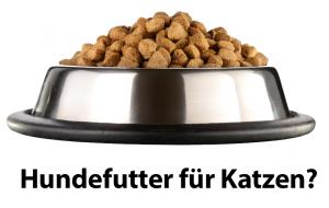 hundefutter-für-katzen