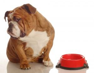 Pankreatitis beim Hund