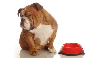 Was ist zu tun: Pankreatitis beim Hund?