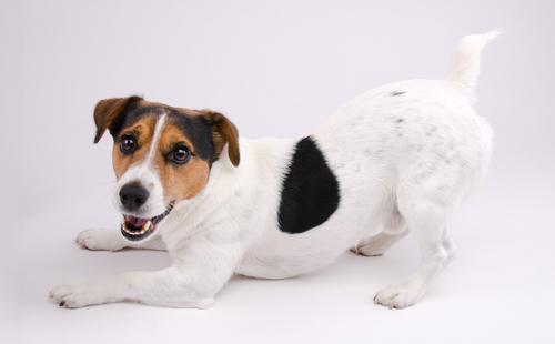 Physiotherapie beim Hund