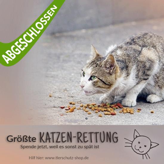 Katzen-Rettung-2017