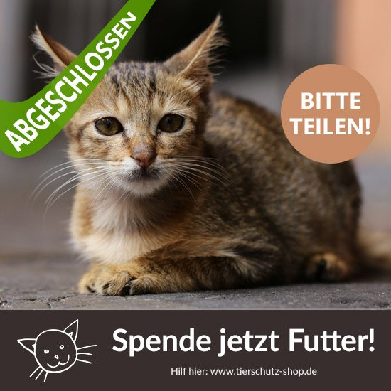 Katzen-Aktion Tierschutz-Shop