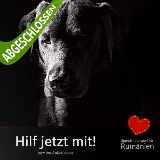Rumänien-Aktion-2016 Tierschutz-Shop Futter spenden