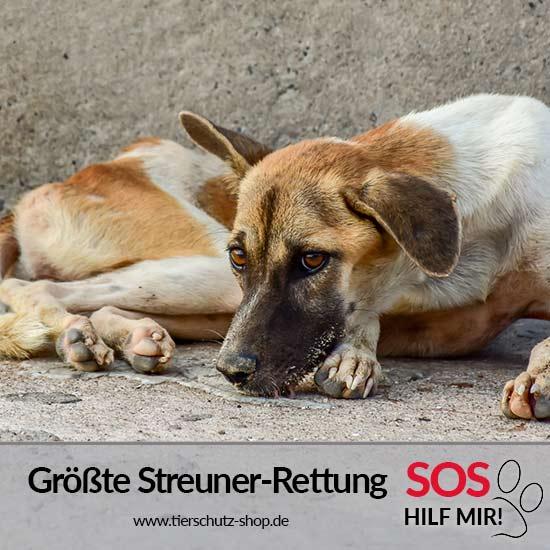 Tierschutz-Shop-Groesste-Streuner-Rettung-Aktion-Übersichtsseite