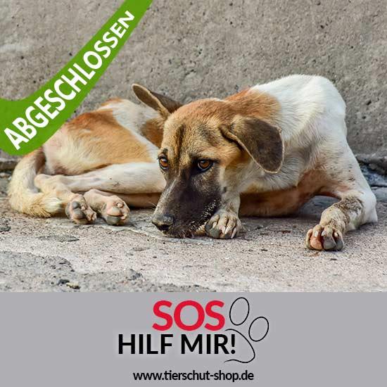 Tierschutz-Shop-Groesste-Streuner-Rettung-Aktion-abgeschlossen