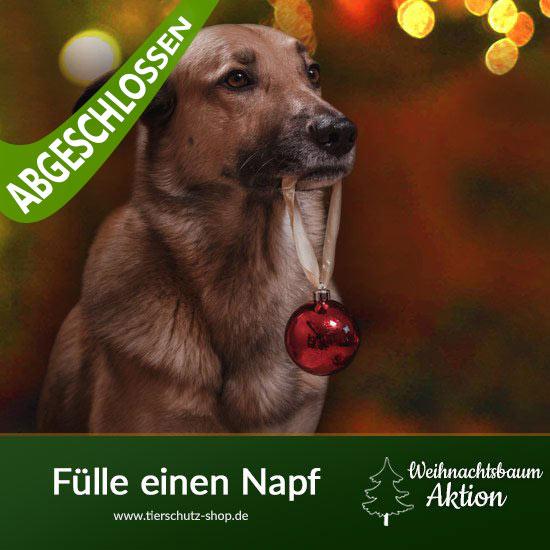 tierschutz-shop-spendenaktionen-weihnachtsbaum-aktion2neu