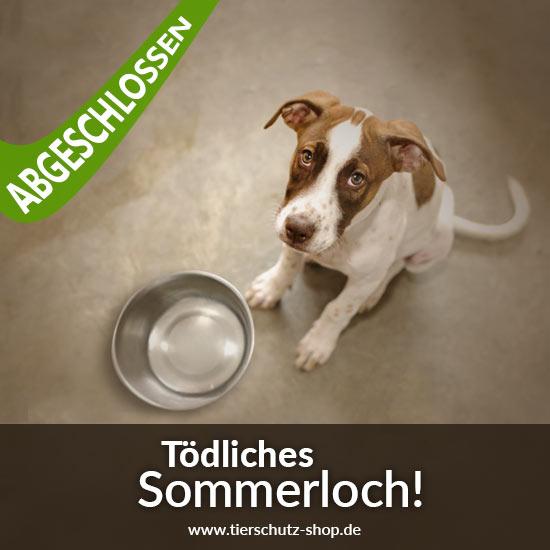 Tierschutz-Shop-Toedliches-Sommerloch-2018-abgeschlossen