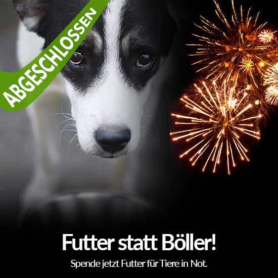 Tierschutz-Shop_Spendenplattform_Futter_statt_Boeller_Aktion_2018_Abgeschlossen_550x550