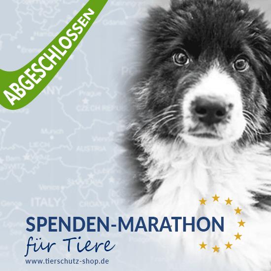 Spenden-Marathon_für_Tiere_2017_abgeschlossen