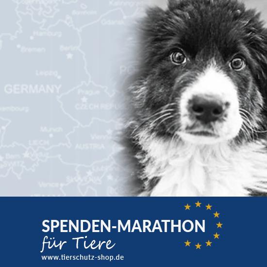 Spendenaktionen_Tierschutz-Shop__Spenden-Marathon_für_Tiere_2017