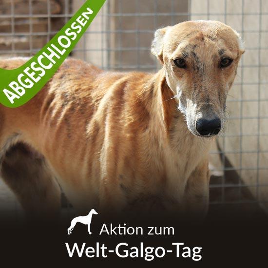 Tierschutz-Shop__Aktion_zum_Welt_Galgo_Tag_2019_Abgeschlossen_550x550