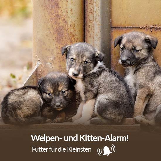 Tierschutz-Shop__Welpen_und_Kitten_Alarm_2019_Abgeschlossen_Ohne_550x550