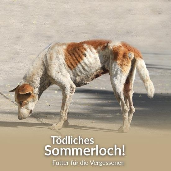 Tierschutz-Shop_toedliches_Sommerloch_2019_Abgeschlossen_Ohne_550x550