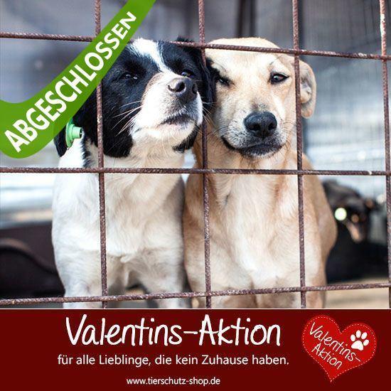 Valentins-Aktion 2016 Tierschutz-Shop Futter spenden Tieren helfen