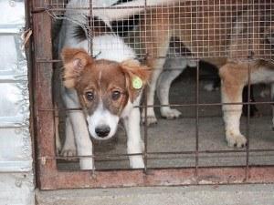 Fellnasen-Nothilfe Tierschutz-Shop Futter spenden Tieren helfen