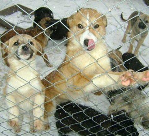 ProDogRomania Tierschutz-Shop Futter spenden Tieren Helfen