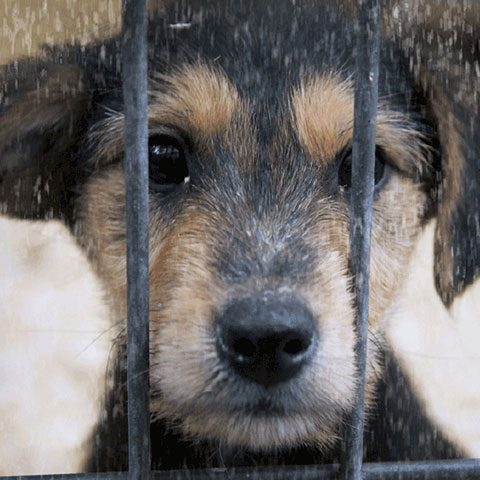 Tierhilfe Hoffnung Smeura Rumänien-Aktion Tierschutz-Shop