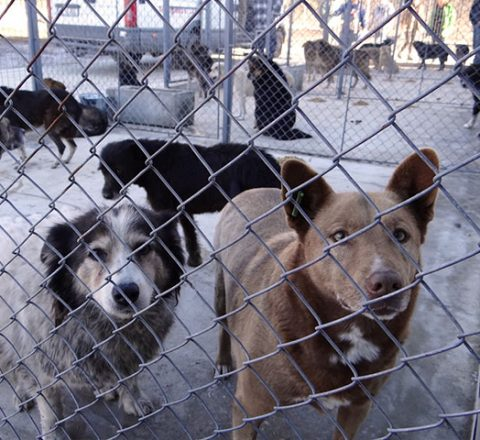 Tierhilfe Hoffnung Smeura Tierschutz-Shop